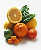 Various citrus fruits, half a grapefruit on top