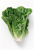 Romaine lettuce with drops of water