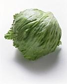 Iceberg Lettuce Head
