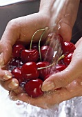 Washing Red Cherries