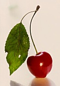 A Single Ripe Red Cherry