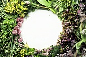 Assortment of Fresh Herbs Arranged in a Circle