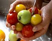 Hände halten rote,grüne,gelben Tomaten unter Wasserstrahl