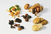Various mushrooms on white background