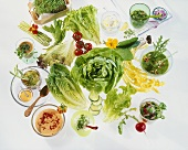 A few salad leaves and lots of tasty salad dressings