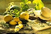 Summery arrangement of melons and lemons