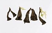 Mushrooms: a few black chanterelles (Horn of plenty)