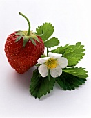 Strawberry; Leaf; Flower