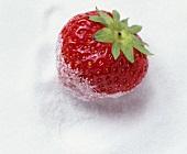 Eine Erdbeere liegt auf Kristallzucker