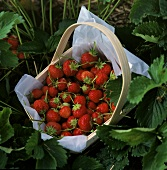 A Basket of Fresh Strawberries