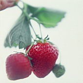 Two Strawberries; Soft Focus