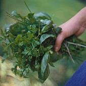 A Hand Holding Fresh Herbs