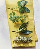 Lemon balm, chervil, bay leaves and rosemary on yellow cloth