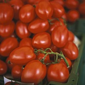 Plum tomatoes in a crate at the market