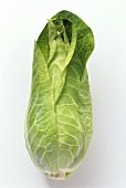 A pointed cabbage