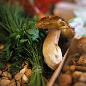 Mushrooms in a crate with herbs and cep on top
