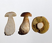 The cap of a cep and half a cep