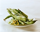 Broad beans, whole and bean kernels, in bowl
