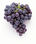 Table grapes: Meraner Kurtraube