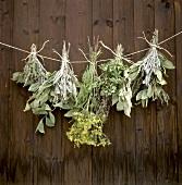 Fünf Bund getrocknete Kräuter hängen nebeneinander an Schnur