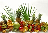 Exotic fruits with citrus fruits; decoration; palm leaves