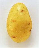 A Malta potato