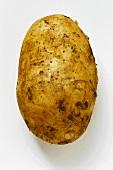 A potato, variety Sieglinde