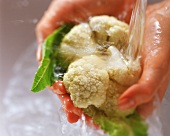 Hands washing cauliflower under running water