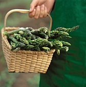 A Basket Full of Asparagus