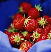 Strawberries on blue fabric