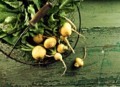 Teltow turnips (white turnips) in wire basket