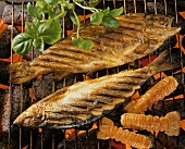 Fish with herbs and scampi on glowing barbecue