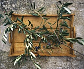 Olive branch with fresh olives on wooden tray