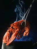 Boiled lobster being lifted from steaming pan with tongs
