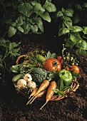 Weidenkorb mit frischem Gemüse auf Erde, dahinter Kräuter