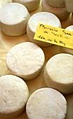 A few Brocciu cheese from Corsica