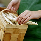 Hand laying white asparagus in a chip basket