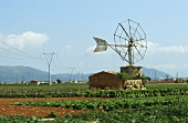 Old windmill in a field on Majorca