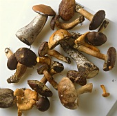 Various forest mushrooms on white background