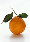 A Single Orange with Leaves