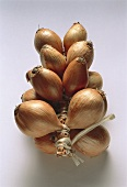 A rope of shallots