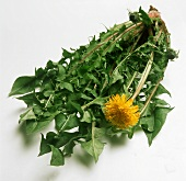A bunch of dandelion leaves with flower