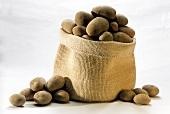 A jute sack of potatoes