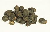 Dried sabal fruits of the dwarf palm (Sabal serulata)