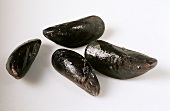 Four closed mussels