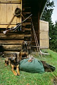 Two hunting dogs in front of hunting lodge