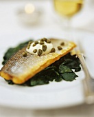 Pike-perch with capers on spinach