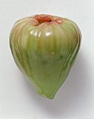 Java Apple
