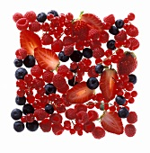 Various Berries in a Square
