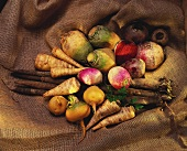 Still life with various types of turnips